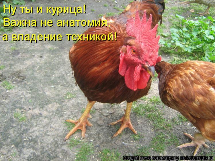 Котоматрица: Ну ты и курица!  Важна не анатомия,  а владение техникой!