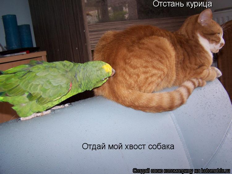 Котоматрица: Отдай мой хвост собака Отстань курица