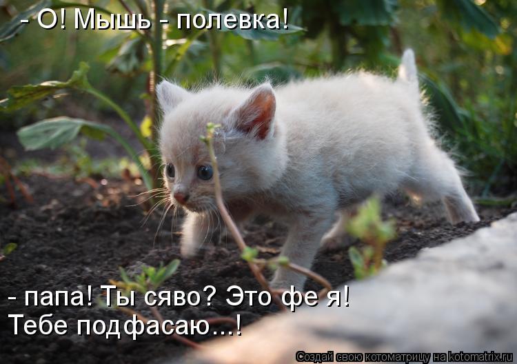 Котоматрица: - О! Мышь - полевка! - папа! Ты сяво? Это фе я!  Тебе подфасаю...!