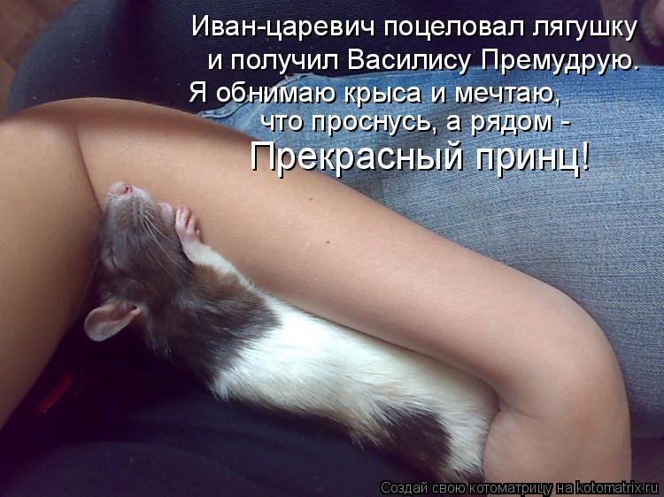 Котоматрица: Иван-царевич поцеловал лягушку Я обнимаю крыса и мечтаю, что проснусь, а рядом - Прекрасный принц! и получил Василису Премудрую.
