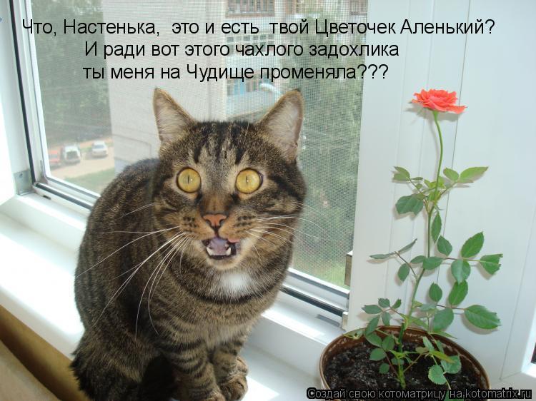 Котоматрица: И ради вот этого чахлого задохлика  ты меня на Чудище променяла??? Что, Настенька,  это и есть  твой Цветочек Аленький?
