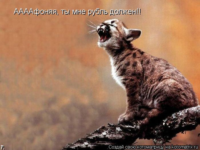 Котоматрица: ААААфоняя, ты мне рубль должен!!