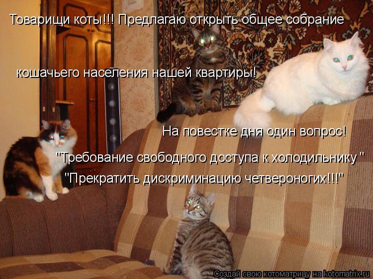 """Котоматрица: Товарищи коты!!! Предлагаю открыть общее собрание   кошачьего населения нашей квартиры! На повестке дня один вопрос! """"Требование свободного"""