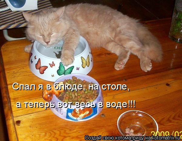 Котоматрица: Спал я в блюде, на столе, а теперь вот весь в воде!!!
