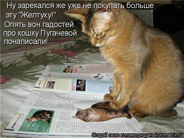 """Котоматрица: Ну зарекался же уже не покупать больше  эту """"Желтуху!"""" Опять вон гадостей про кошку Пугачевой понаписали!"""
