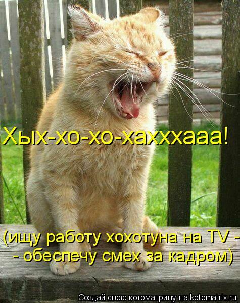 Котоматрица: (ищу работу хохотуна на TV - - обеспечу смех за кадром) Хых-хо-хо-хахххааа!