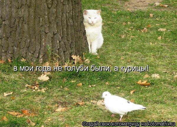 Котоматрица: в мои года не голуби были, а курицы!