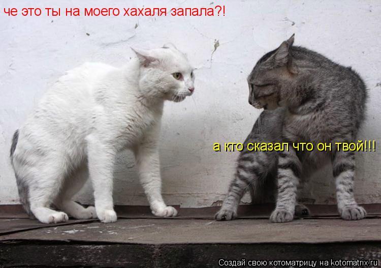 Котоматрица: че это ты на моего хахаля запала?! а кто сказал что он твой!!!