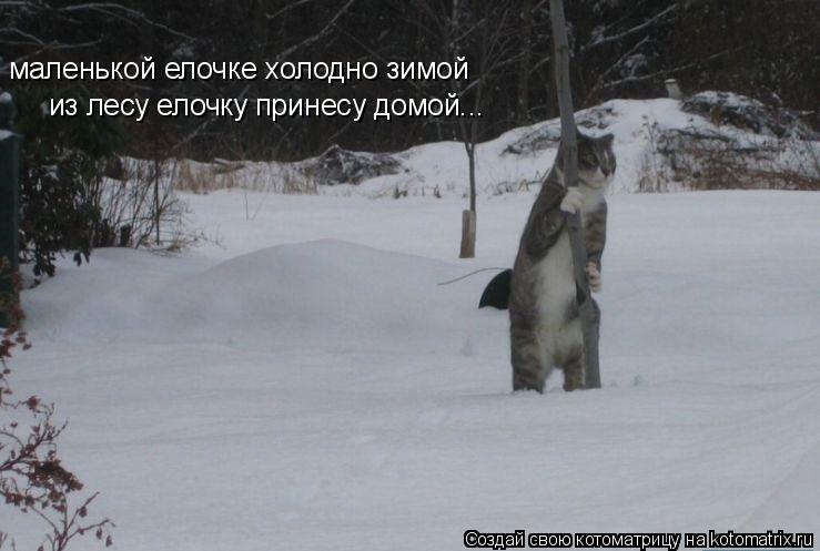 Котоматрица: маленькой елочке холодно зимой из лесу елочку принесу домой...