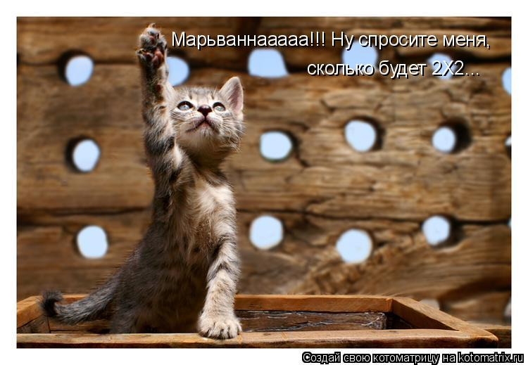 Котоматрица: Марьваннааааа!!! Ну спросите меня, сколько будет 2Х2...