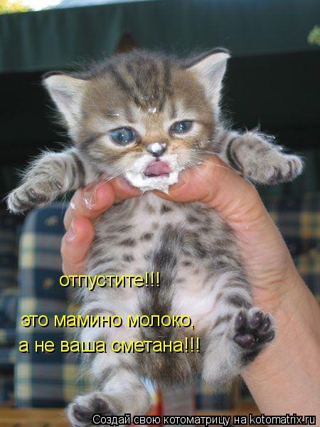 Котоматрица: отпустите!!! это мамино молоко,  а не ваша сметана!!!
