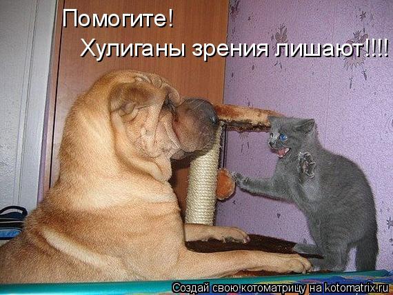 Котоматрица: Помогите! Хулиганы зрения лишают!!!!
