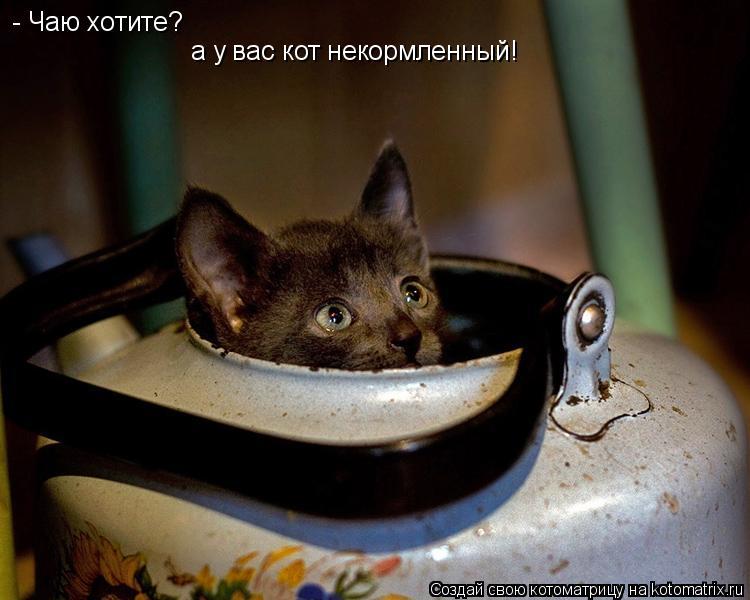 Котоматрица: - Чаю хотите?  а у вас кот некормленный!