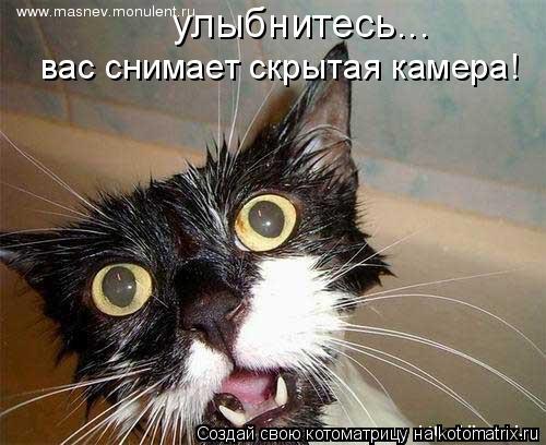 Котоматрица: улыбнитесь... вас снимает скрытая камера!