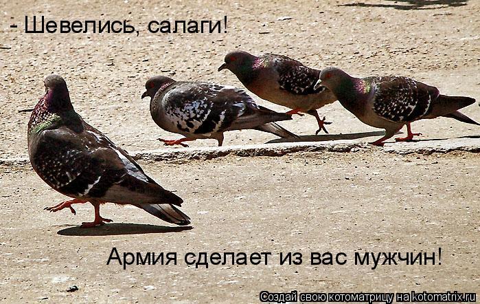 Котоматрица: - Шевелись, салаги! Армия сделает из вас мужчин!