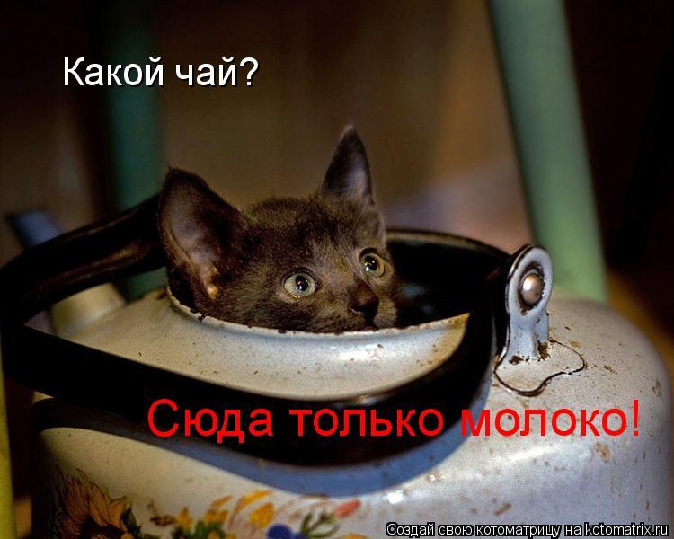 Котоматрица: Какой чай? Сюда только молоко!