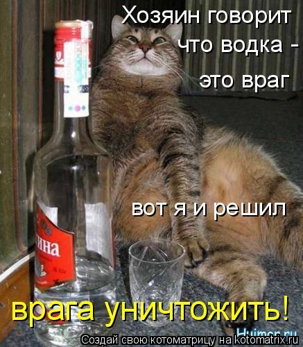 Котоматрица: Хозяин говорит что водка - это враг вот я и решил врага уничтожить!