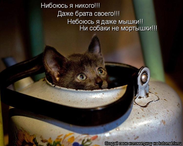Котоматрица: Нибоюсь я никого!!! Даже брата своего!!! Небоюсь я даже мышки!! Ни собаки не мортышки!!!