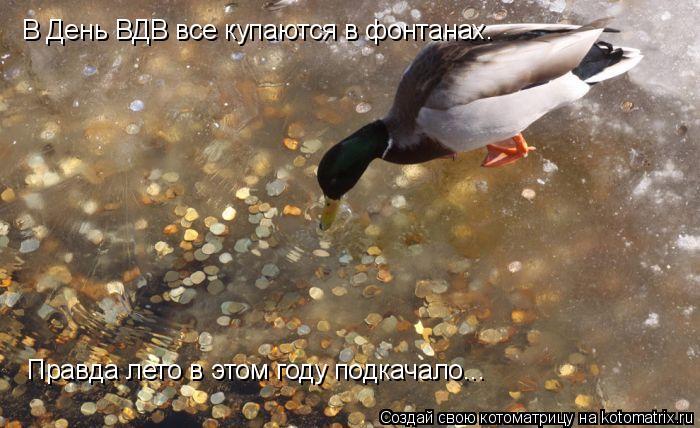Котоматрица: В День ВДВ все купаются в фонтанах. Правда лето в этом году подкачало...
