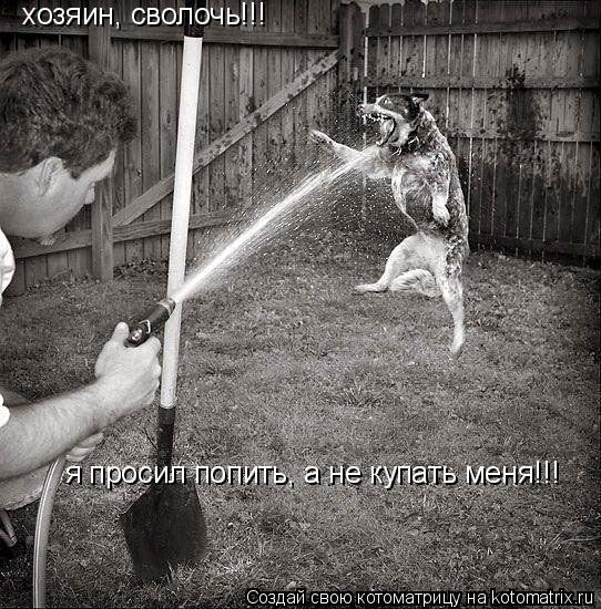 Котоматрица: хозяин, сволочь!!! я просил попить, а не купать меня!!!
