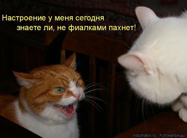 Котоматрица: Настроение у меня сегодня знаете ли, не фиалками пахнет!