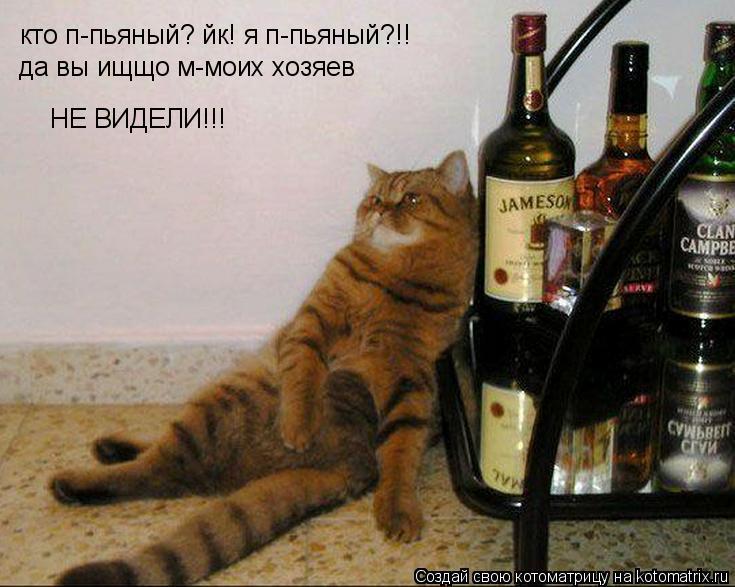 Котоматрица: кто п-пьяный? йк! я п-пьяный?!! да вы ищщо м-моих хозяев НЕ ВИДЕЛИ!!!
