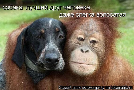 Котоматрица: собака  лучший друг человека собака  лучший друг человека даже слегка волосатая