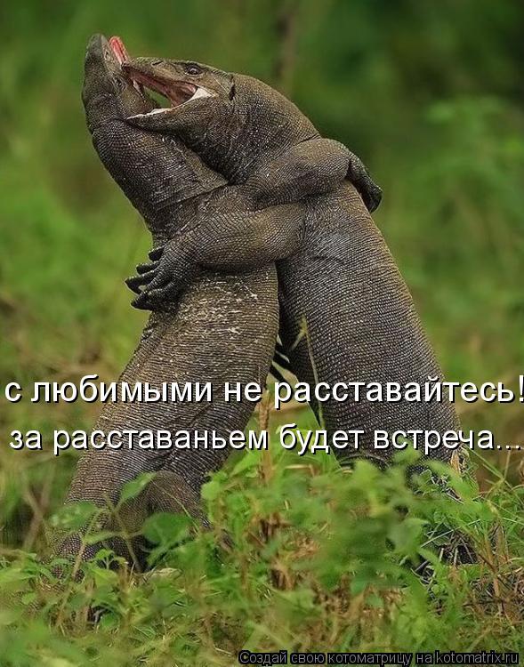 Котоматрица: с любимыми не расставайтесь! за расставаньем будет встреча...