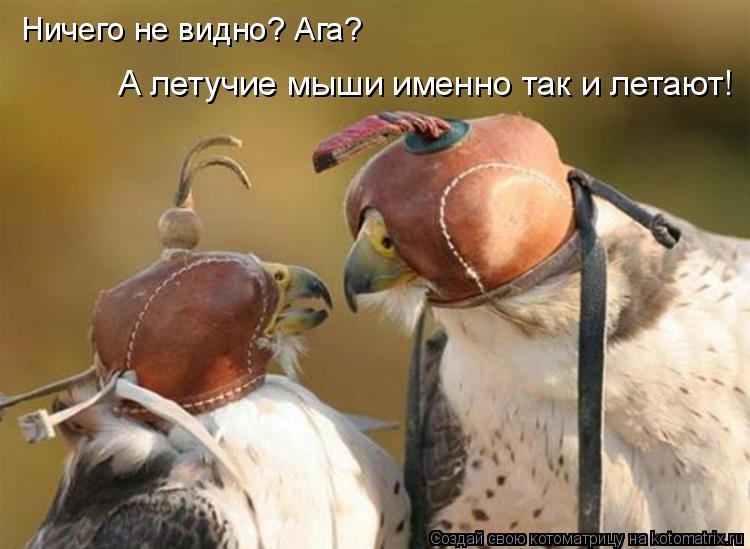 Котоматрица: Ничего не видно? Ага? А летучие мыши именно так и летают!