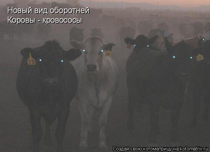 Котоматрица: Новый вид оборотней Коровы - кровососы
