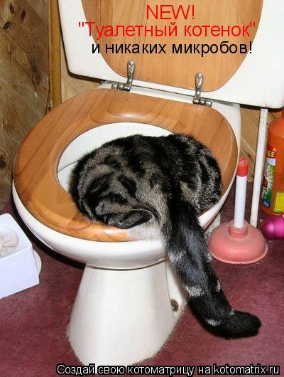 """Котоматрица: NEW! """"Туалетный котенок"""" и никаких микробов!"""