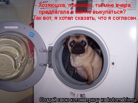 Котоматрица: - Хозяюшка, помнишь, ты мне вчера предлагала в ванне выкупаться? Так вот, я хотел сказать, что я согласен.