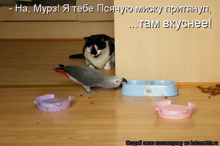 Котоматрица: - На, Мурз! Я тебе Псячую миску притянул,  ...там вкуснее!