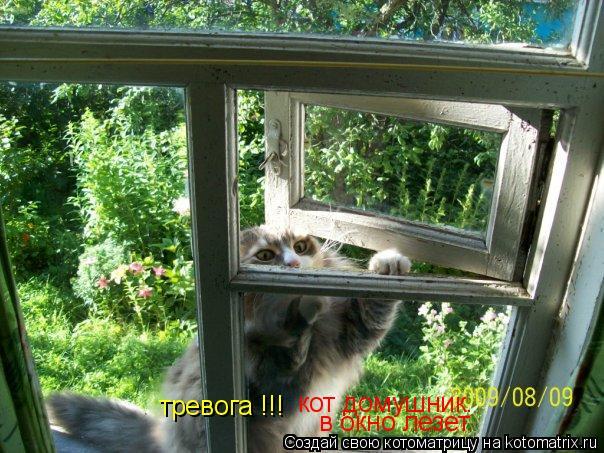 Котоматрица: кот домушник. в окно лезет тревога !!!