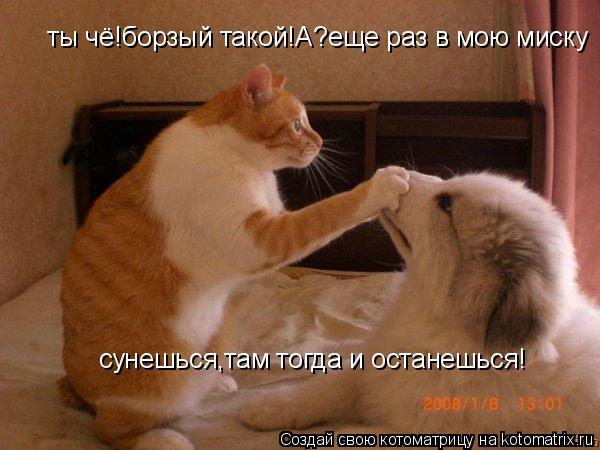 Котоматрица: ты чё!борзый такой!А?еще раз в мою миску  сунешься,там тогда и останешься!