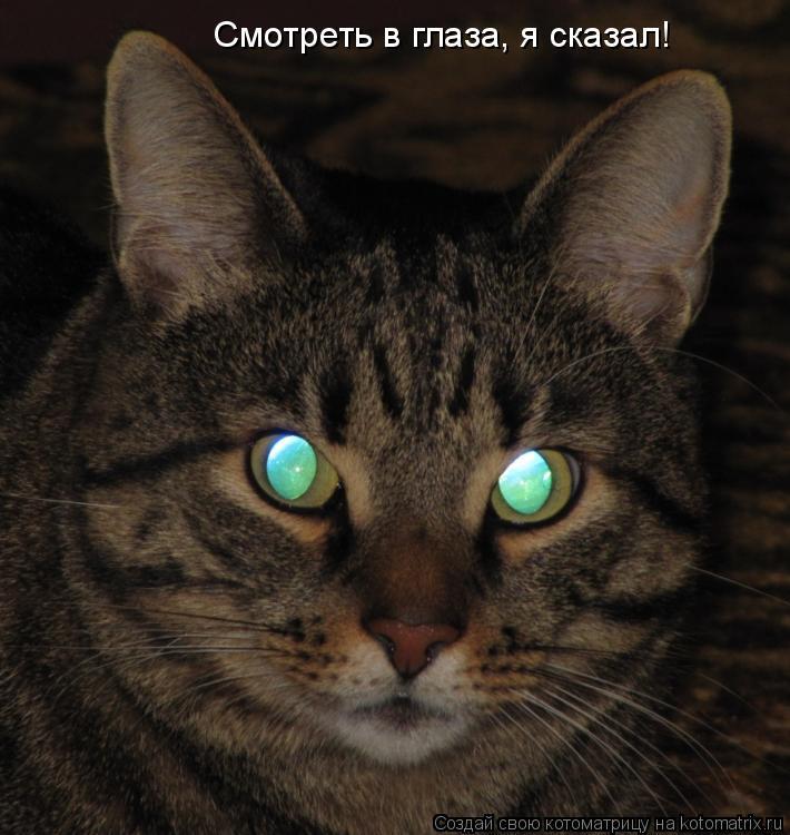 Котоматрица: Смотреть в глаза, я сказал!