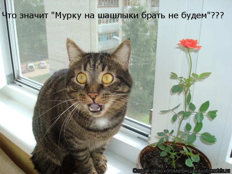 """Котоматрица: Что значит """"Мурку на шашлыки брать не будем""""???"""