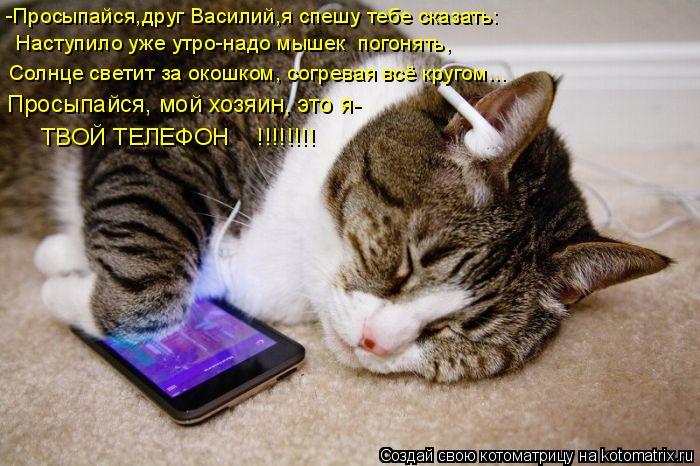 Котоматрица: -Просыпайся,друг Василий,я спешу тебе сказать: Наступило уже утро-надо мышек  погонять, Солнце светит за окошком, согревая всё кругом...   ТВО