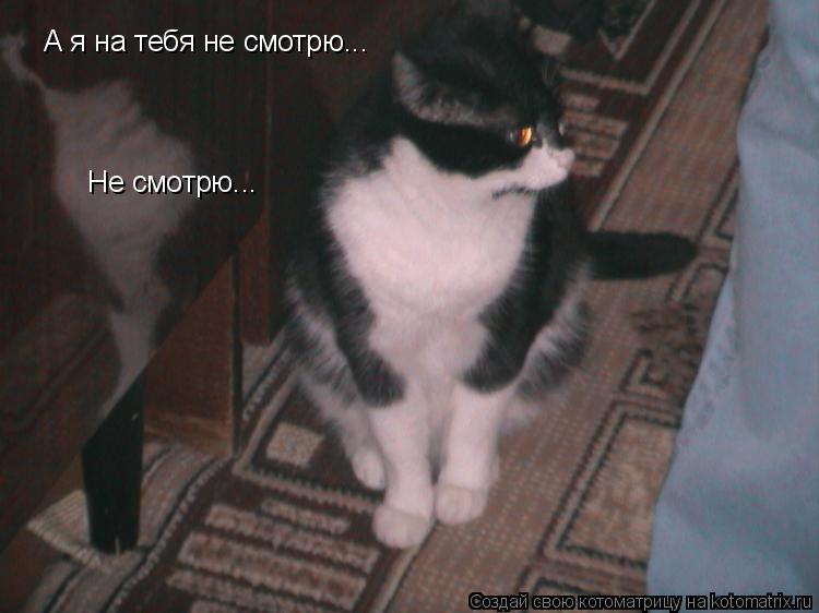 Котоматрица: А я на тебя не смотрю... Не смотрю...