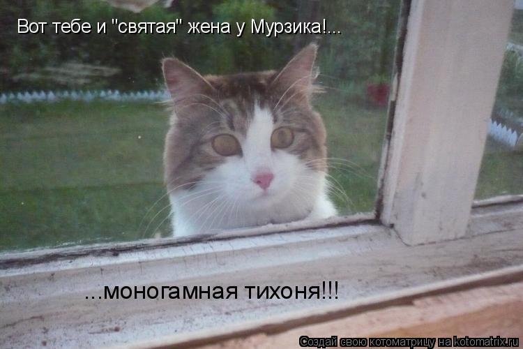 "Котоматрица: Вот тебе и ""святая"" жена у Мурзика!... ...моногамная тихоня!!!"
