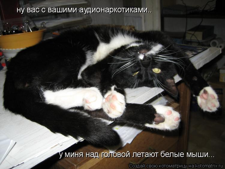 Котоматрица: ну вас с вашими аудионаркотиками.. у миня над головой летают белые мыши...