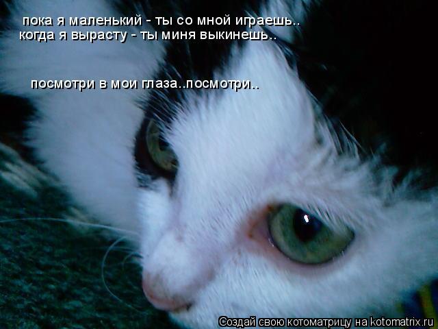 Котоматрица: пока я маленький - ты со мной играешь.. когда я вырасту - ты миня выкинешь.. посмотри в мои глаза..посмотри..