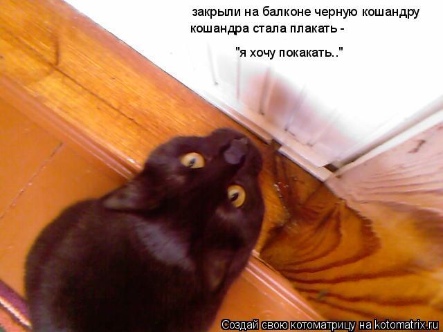 """Котоматрица: закрыли на балконе черную кошандру кошандра стала плакать -  """"я хочу покакать.."""""""