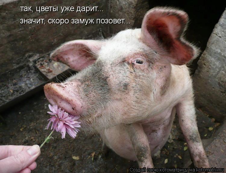 Котоматрица: так, цветы уже дарит... значит, скоро замуж позовет...