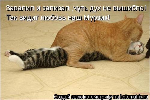 Котоматрица: Завалил и зализал ,чуть дух не вышибло! Так видит любовь наш Мурзик!