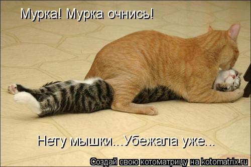 Котоматрица: Мурка! Мурка очнись! Нету мышки...Убежала уже...
