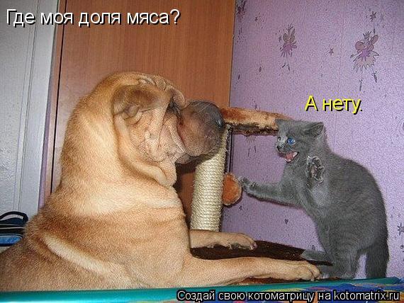 Котоматрица: Где моя доля мяса? А нету.