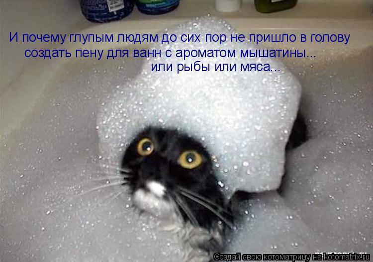 Котоматрица: И почему глупым людям до сих пор не пришло в голову  создать пену для ванн с ароматом мышатины... или рыбы или мяса...