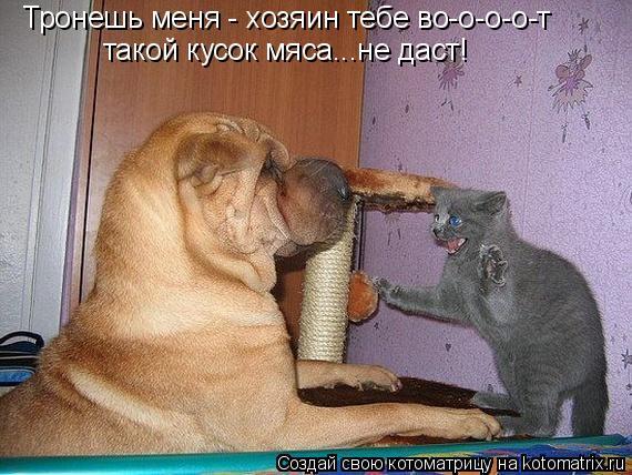 Котоматрица: Тронешь меня - хозяин тебе во-о-о-о-т такой кусок мяса...не даст!