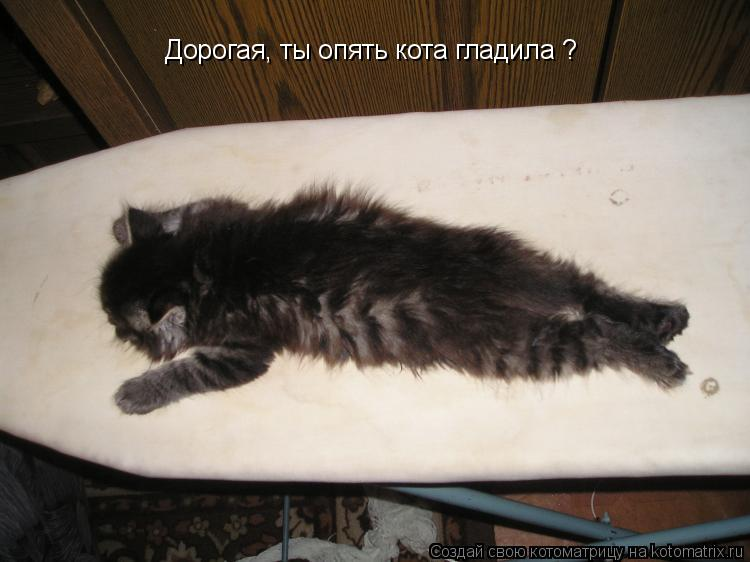 Котоматрица: Дорогая, ты опять кота гладила ?